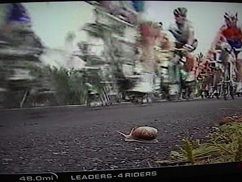 snailcam071409.jpg