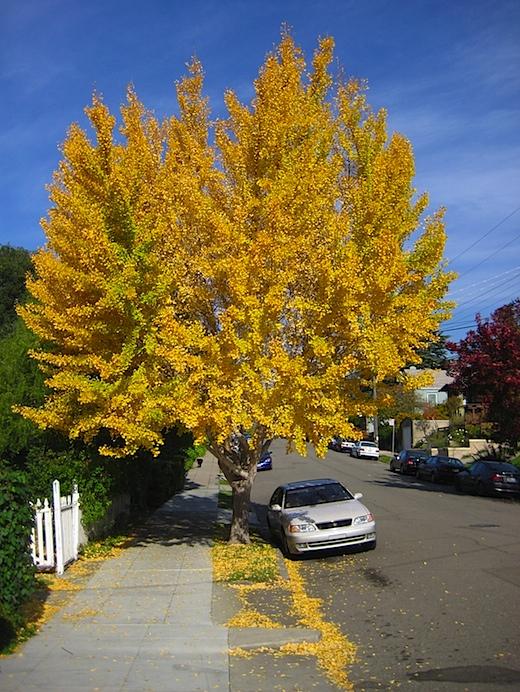 tree120109.jpg