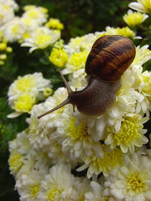 snail091810.jpg