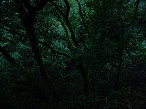trees122610.jpg