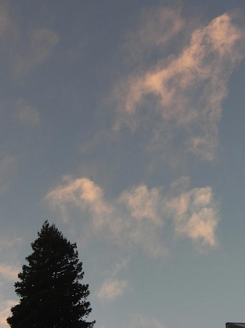treecloud100911.jpg