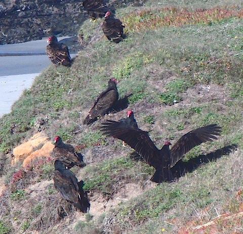 vultures120311c.jpg