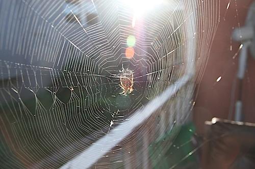 spider103011.jpg