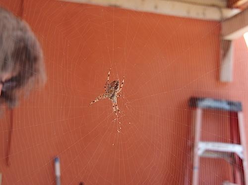 spider102211.jpg