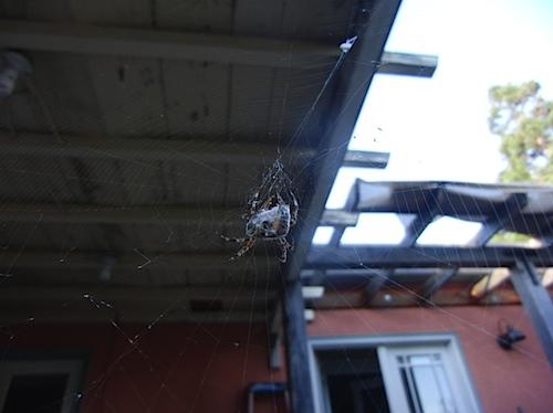 spider102311a.jpg