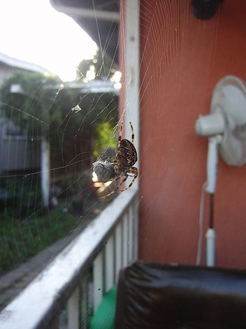spider102311.jpg