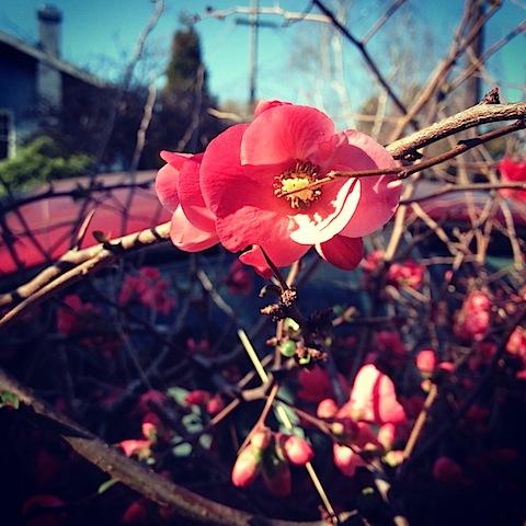 blossom020812.jpg