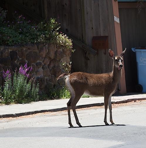 deer060112.jpg