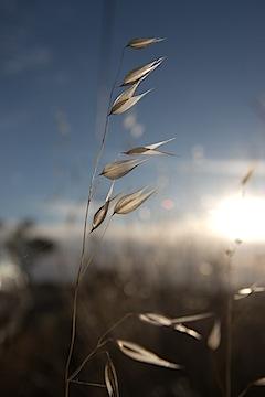 tehama-grass052012.jpg