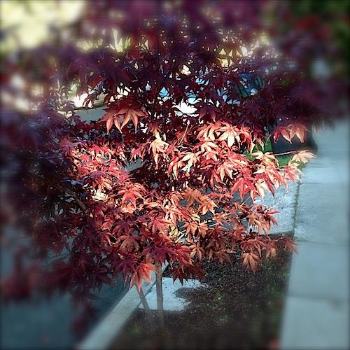 tree112312.jpg