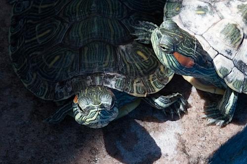 turtle050413.jpg