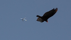 vultures052413a.jpg