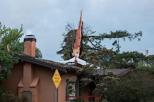 redwood033114.jpg