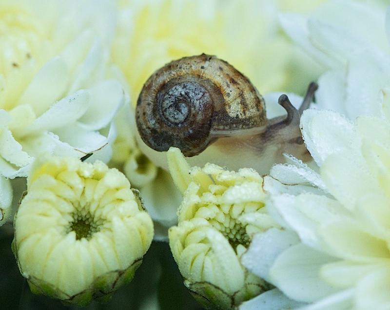 snail150916a.jpg