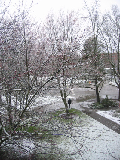 Snow in Eugene