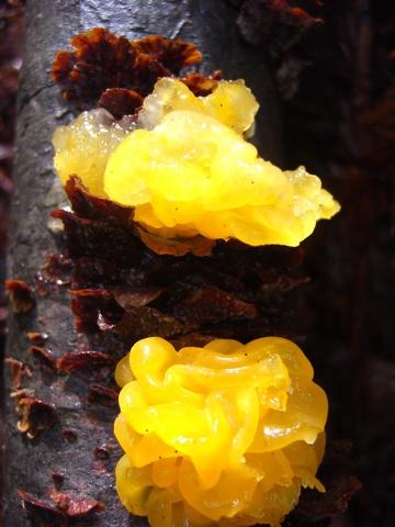 Fungus011408