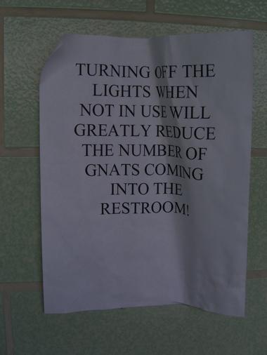 Gnats