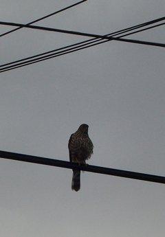 Hawk122606A